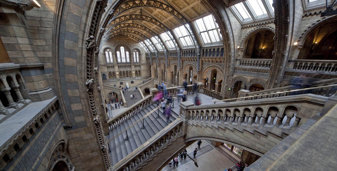 Foyer Museum Jobs : Head of consulting natural history museum artsjobsonline